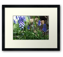 Springtime Purple Framed Print