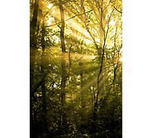 Sunrays Through the Trees Photographic Print