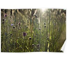 Flowers during sunset Poster