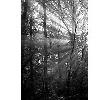 Sunrays Through the Trees in Black and White Photographic Print