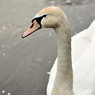 Swan by Anete Bauere