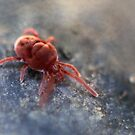 Red spider by LisaRoberts