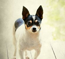 Sweet Eddie ~ by Renee Blake