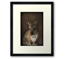 Baby Wallaby ~ Framed Print