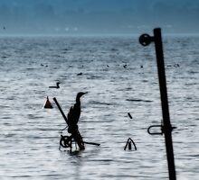 Cormorants on the lake by LifePictures