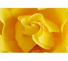 Yellow Precious Photographic Print
