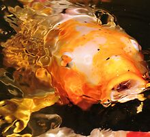 Colorful Koi by Dennis Stewart