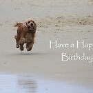 Have A Happy Birthday by aussiebushstick