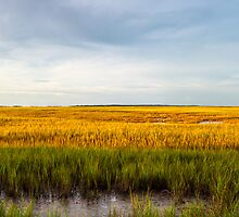 Lazaretto Marsh Panorama - Georgia Coast by Mark Tisdale