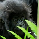Gorilla Baby by LSPJS