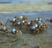 Soldier Crabs by yolanda