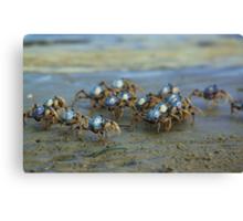 Soldier Crabs Canvas Print