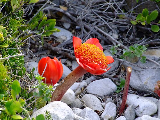yes a flower by croust