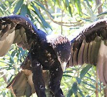 taking flight by Adam Thomson