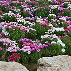 There Between the Flowers by Nira Dabush