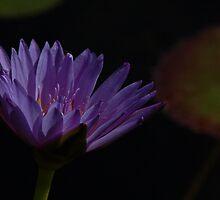 A Study in Purple by samuellee