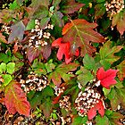 Autumn Jewels by debidabble