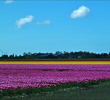 Dutch Tulip Fields c by Janone