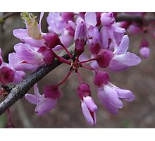 Newness of Spring Photographic Print