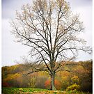 The Farmers Tree by LocustFurnace
