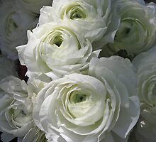 Ranunculus by Mary  Knoth