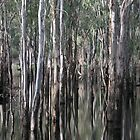 eucalypts reflected - by Tessa by Janine Paris