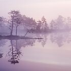 Fog in the bog by Tiina Gill