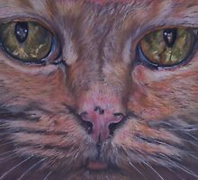 Cats eyes by Sharon Herbert