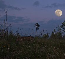 Chaos Under The Moon by ArsSilentium