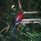 Feeding Wild Rosella - Touched up by warmonger62