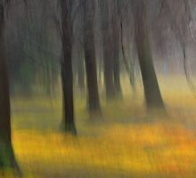 fabled forest.. by JOSEPHMAZZUCCO