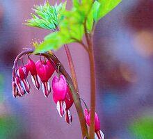 Bleeding Heart Flowers by Anita Pollak