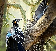 The Dove vs. the Roadrunner  by Saija  Lehtonen