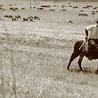 Lonely Herd by John Papaioannou