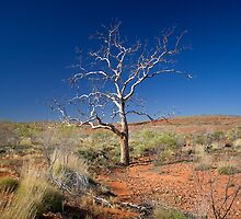 Lone Tree by Richard  Windeyer