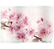 Apple Blossoms in High Key Poster