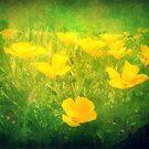 Field of Golden Poppies by Lea  Weikert