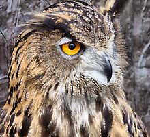 Eurasian Eagle Owl. by Lilian Marshall