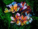 Frangipani....A Touch of Frost... by © Janis Zroback