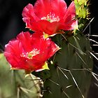 Red Prickly Pear Cactus  by Saija  Lehtonen