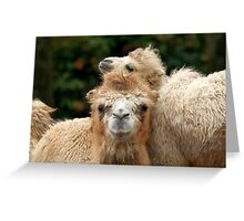 Love you Mom - Bactrian Camel with Baby Greeting Card