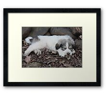 Shhhhh, My Little Buddy Boo Boo Is Napping Framed Print