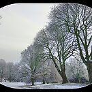 Noorderplantsoen,Park,Trees in a Row in Winter by Aheroy
