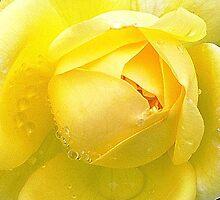 Sunshine & Raindrops - Freesia by EdsMum