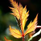 Golden Sunlight by Jarede Schmetterer