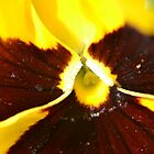 Pansy- on the inside by Kate Farkas