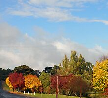 Autumn tones in Kilmore Vic Australia by Margaret Morgan (Watkins)
