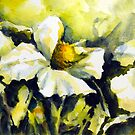 White flowers (californian tree poppies) by Ivana Pinaffo