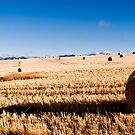 Hay Bale Just After Dawn by CollinScott