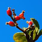 Little Red Fruit by Glenn Cecero